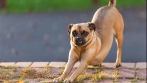 8: Downward Facing Dog