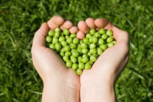 Legumes for senior heart health