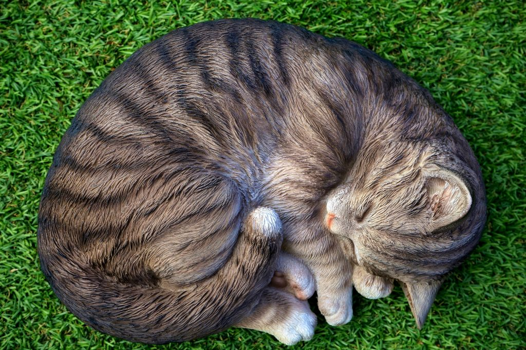 power napping cat